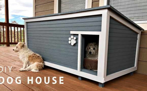 Wooden or plastic kennel: what to choose for my dog