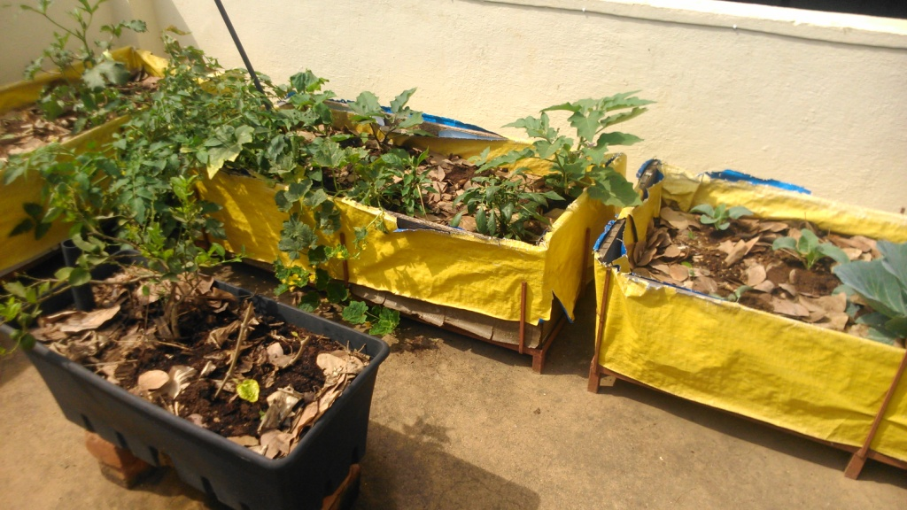 Interested in a Kitchen Garden Top Tips to Get You Started