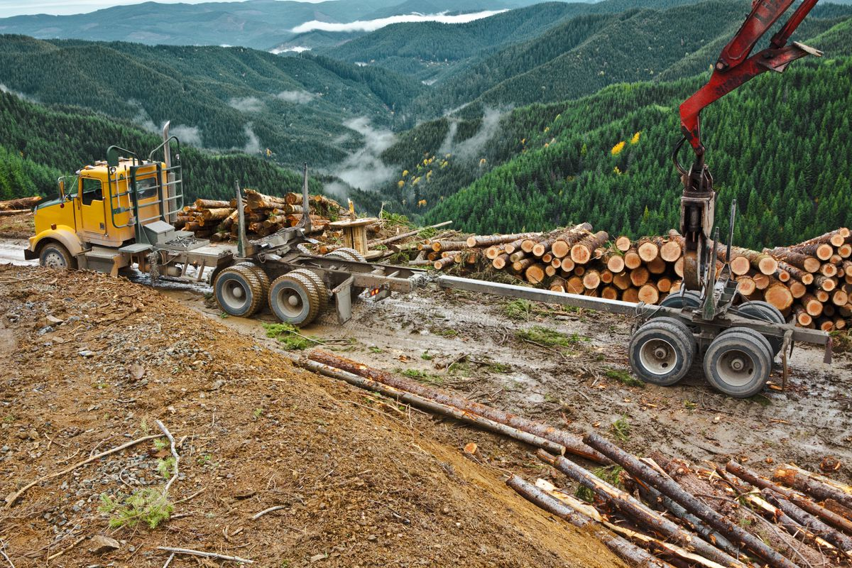 A Three Point Guide To The Lumber Industry