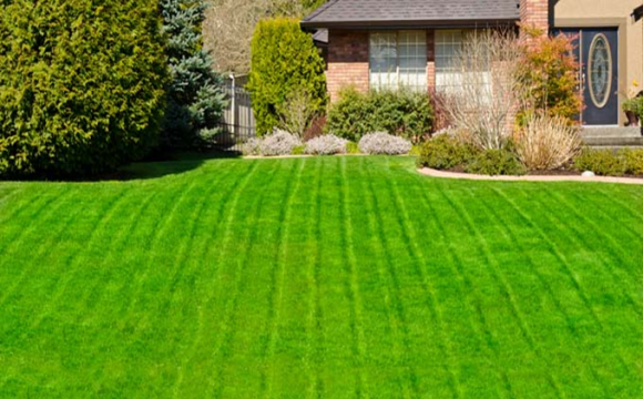 How to make your lawn nice-looking this year?