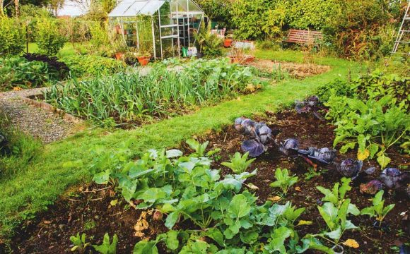 Tips for Managing a Large Garden